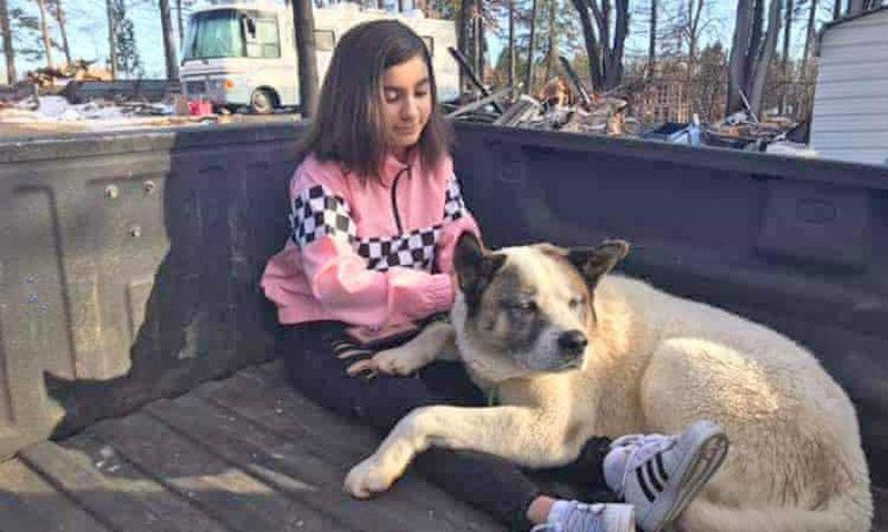 بازگشت سگ گمشده پس از 101 روز