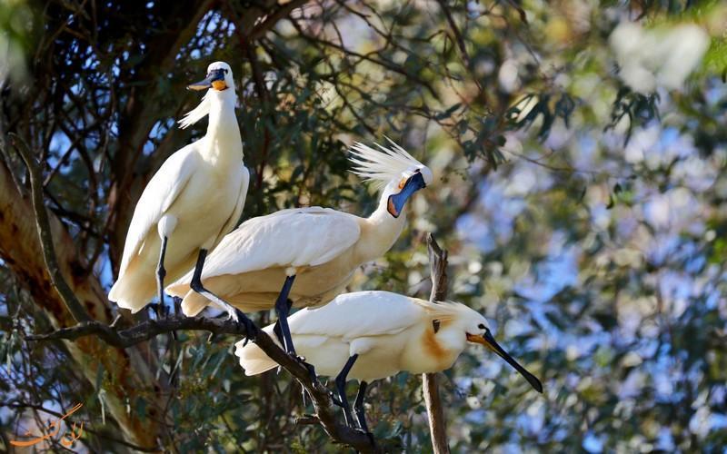 آشنایی با پارک ملی دونیانا در اسپانیا، مکانی ایده آل برای پرنده نگری!