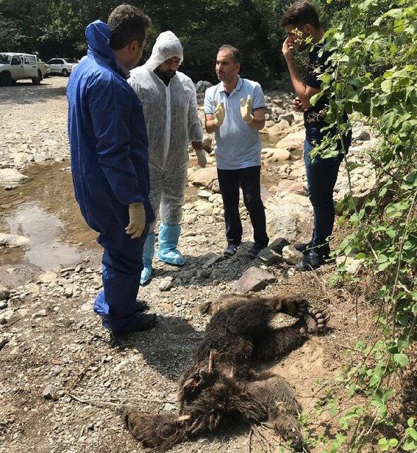 مرگ دو توله خرس در فاصله کمتر از 10 روز در گلستان