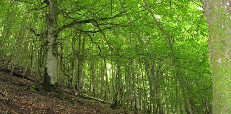 نابودی جنگل ها نفس زمین را می گیرد